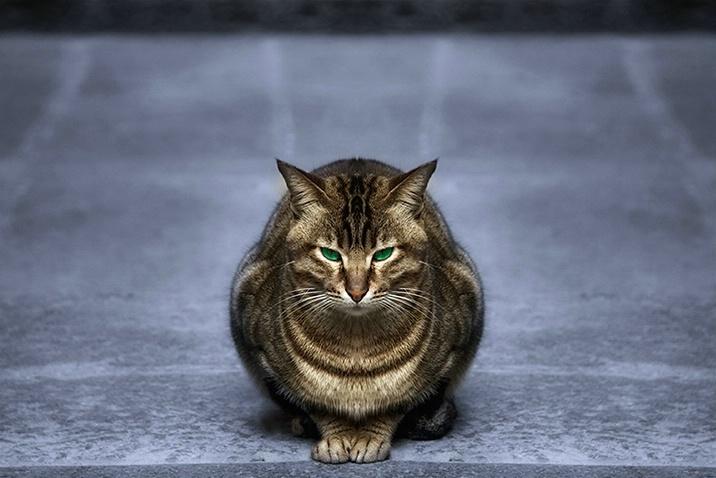 the master of zen