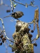 Sharing The Nestw...