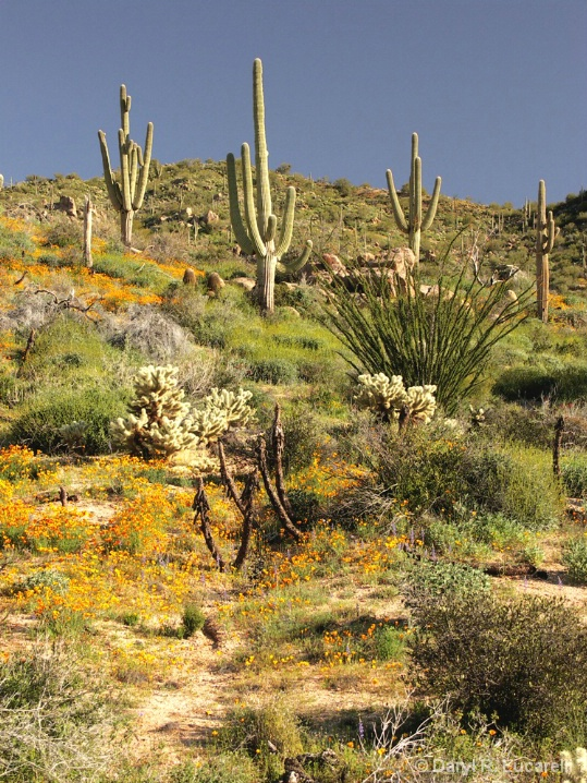 Desert Morning Hillside - ID: 5886118 © Daryl R. Lucarelli