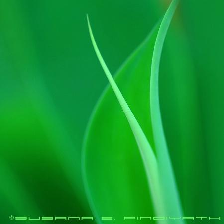 Harmony in Green