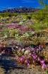 Wildflowers in Wo...