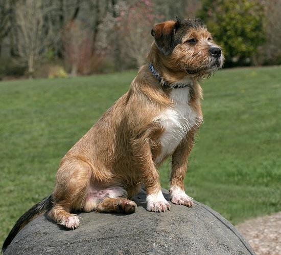 Baxter strkes a pose