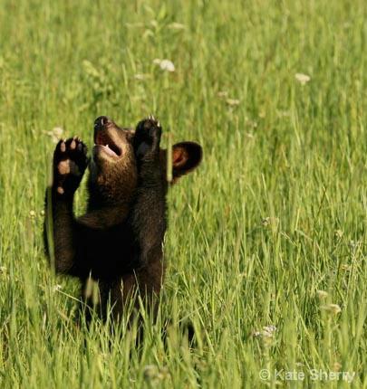 cub - ID: 5939030 © Katherine Sherry