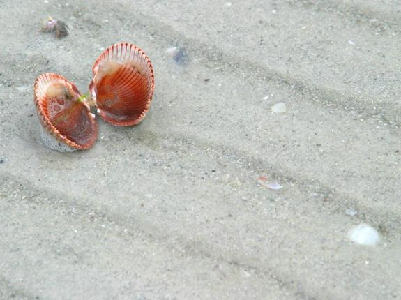 Lone shells