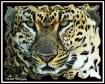 I Am Leopard