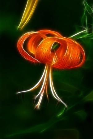Frac Lily