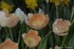 spring_flowers_be...