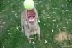 my ball!