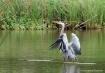 Water Ballet Repr...