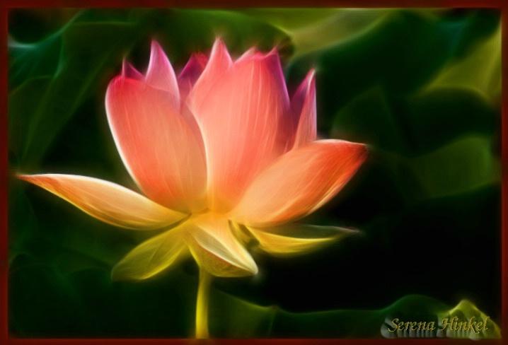 Lotus Aglow