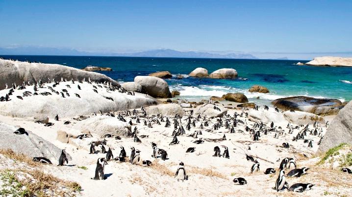 penguin_colony - ID: 5963730 © Annie Katz