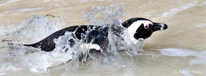 swimming - ID: 5963741 © Annie Katz