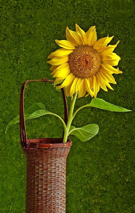 Captive Sunshine