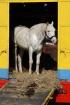Cirkus Horse enjo...