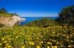 Wild Daisy Cove