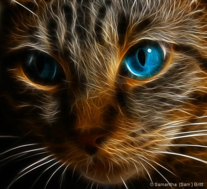 <b>Wild Cat</b>