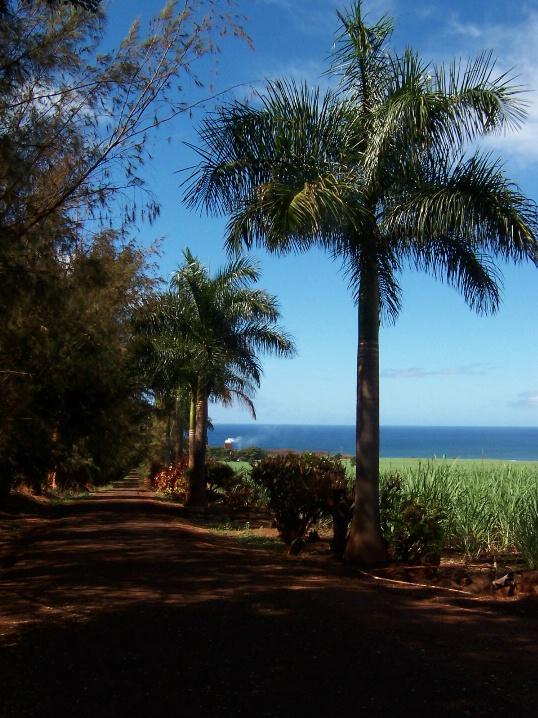 Path of red dirt, Kauai, Hawaii