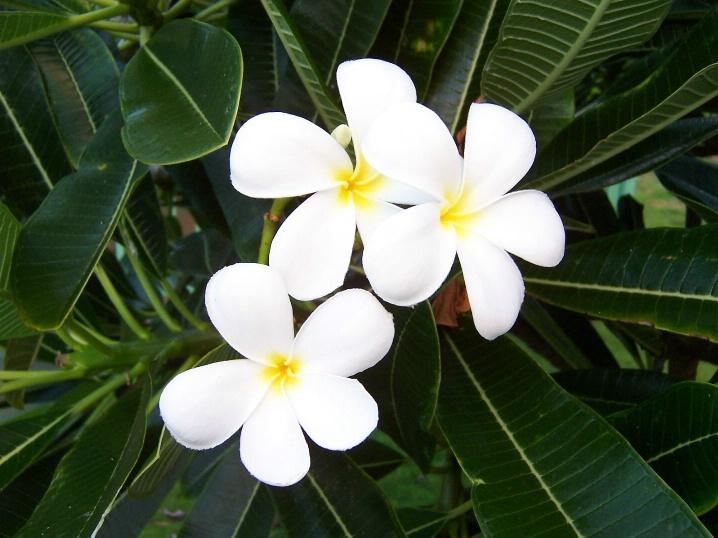 Kauai beauties