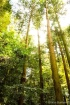 Japanese Forest N...
