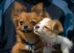 Beanie & Daisy