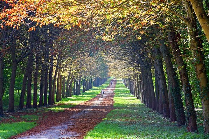 Forest Path - ID: 6026311 © STEVEN B. GRUEBER