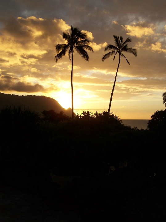 Perfect Palms, Kauai, Hawaii