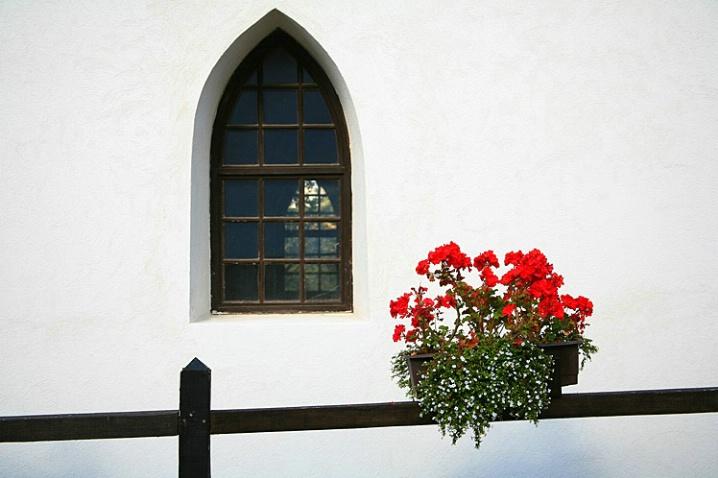 Red Flowers - ID: 6040556 © STEVEN B. GRUEBER