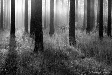 Croatan Forest North Carolina