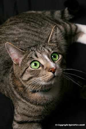 Mr. Green Eyes