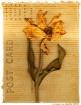 Pressed Flowers (...