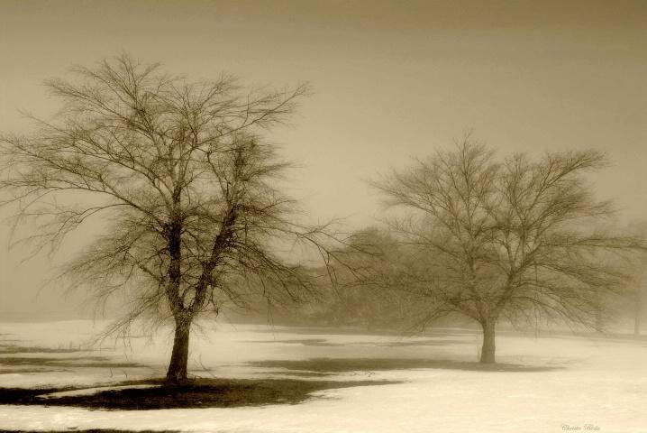 Aged Winter (L)