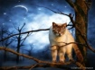 ~ Night Watcher ~