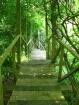 Green stairway (N...