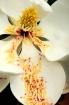 Fading Bloom