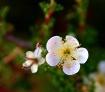 Desert Bloom 3