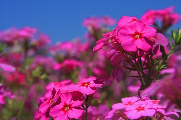 Flora-Florida #6