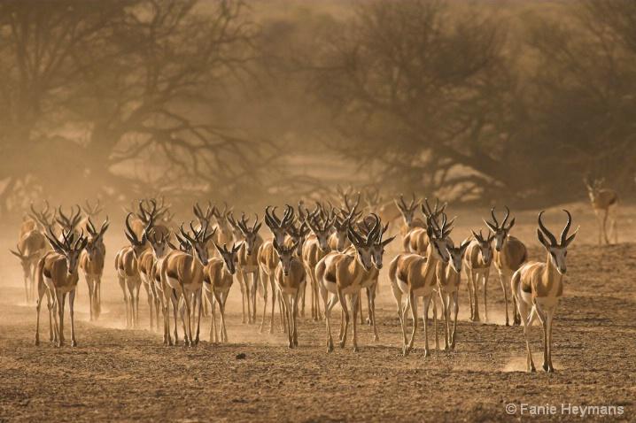 Hot & Dry Africa