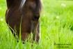 a horse's fav...