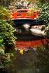 Japanese Garden -...