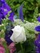 White Glory