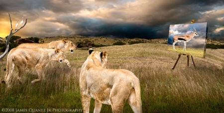 Baiting Lions