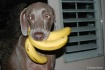 Banana Thief