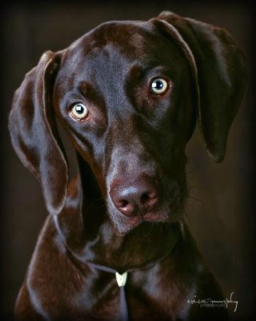 My Designer Dog