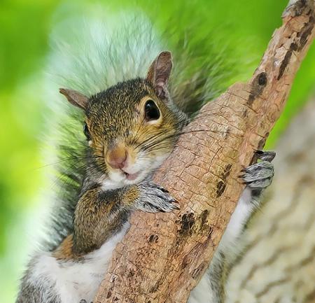 Squirrel hug
