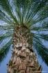 under_my_palm