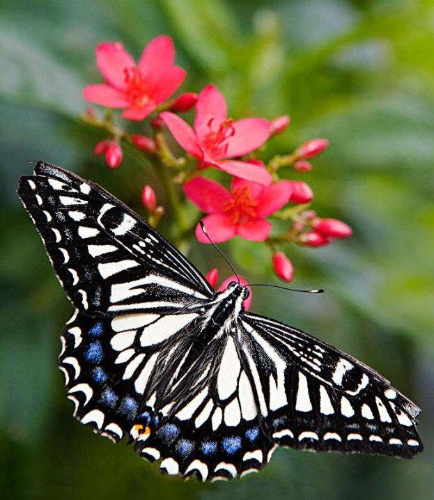 Beauty as a Butterfly