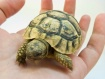 A little turtle i...