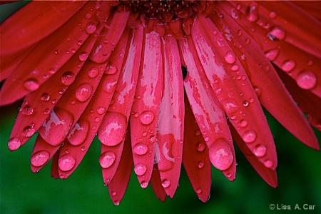 Rain Fan