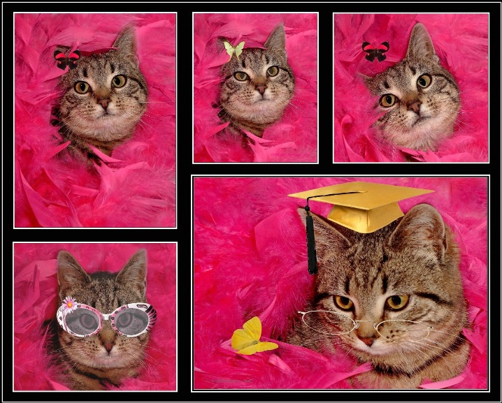 Cat Portraits - ID: 6300768 © Theresa Marie Jones
