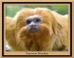 Tamron Monkey